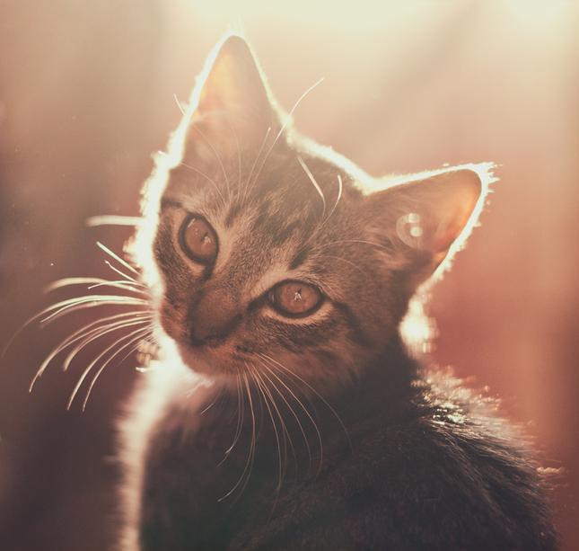 tesné čierne mačička pics