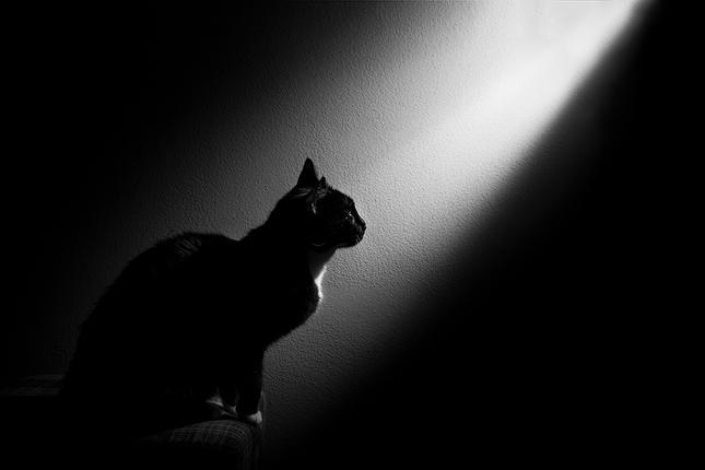 Čierne na bielom