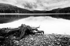 Korene jazera
