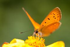 Motýlie radosti I.