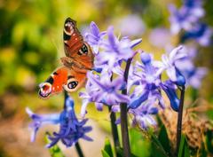 Jarné radosti