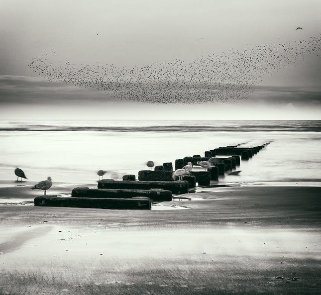 V krajine morských vtákov I.