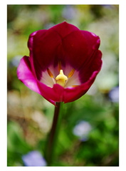 Vo farbách jari...