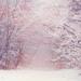 Zimou maľované