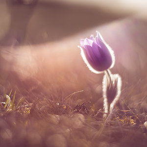 Jarný sen