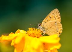 Motýlie radosti II.