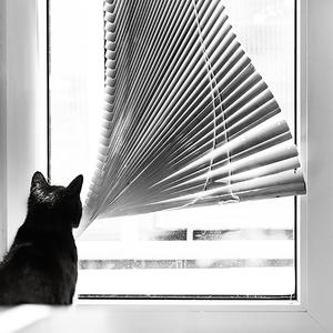 Keď zostanú mačky doma samé...