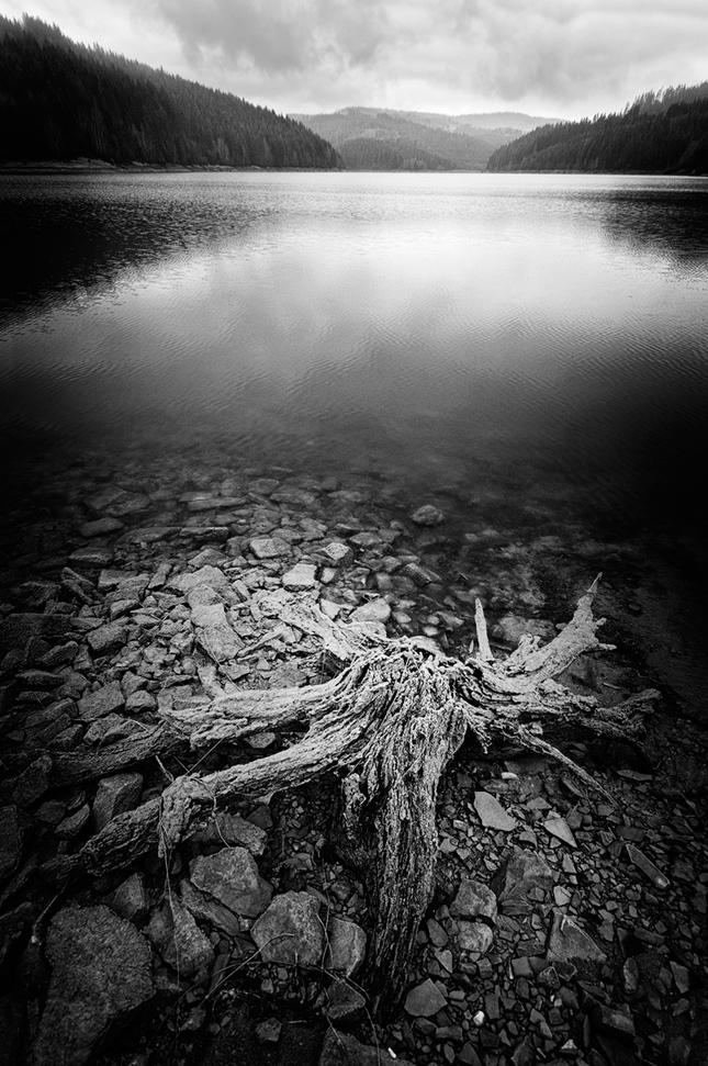 Korene jazera II.