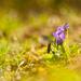 Pod závojom jari