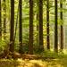 Pokoj lesa