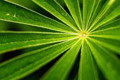 Zelené lúče jari