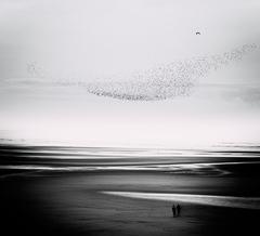 V krajine morských vtákov II.