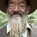 Tibetsky starcek