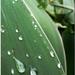 list po daždi