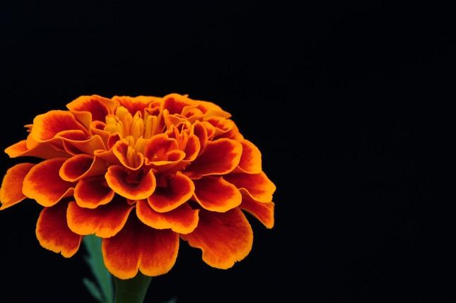 Oranžovú mám rád...
