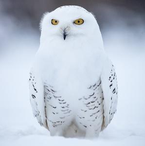 Hedwiga I