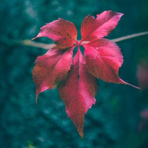 Jesenny kontrast