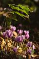 Lesné kvety