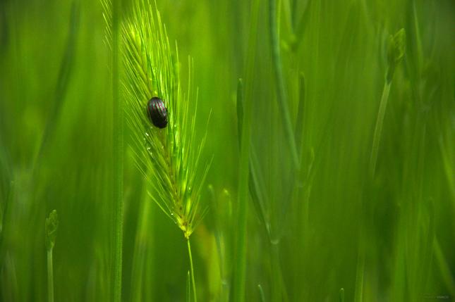 Zelený svet