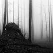 Úskalia lesa..