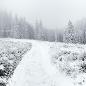 Cesta do zamrznutého lesa ..