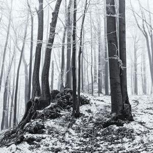 V mrazivom lese ..