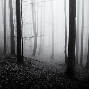 Strácajúc sa v hmle ..