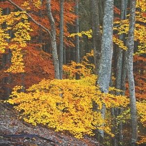 Jesenná poézia ..