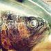 Fishbecher