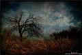 The Novembre Tree