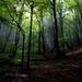 lesy z rána