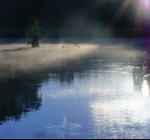rozpačité ráno na rybníku