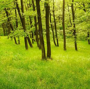 Les na strážnom kopci