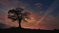 môj strom