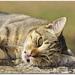 kočka z prístavu