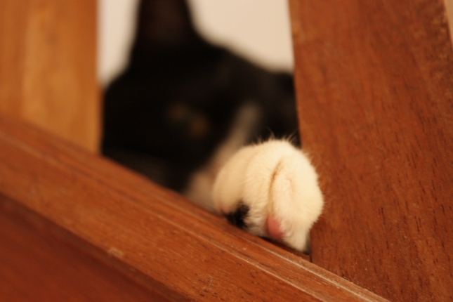 cat chill