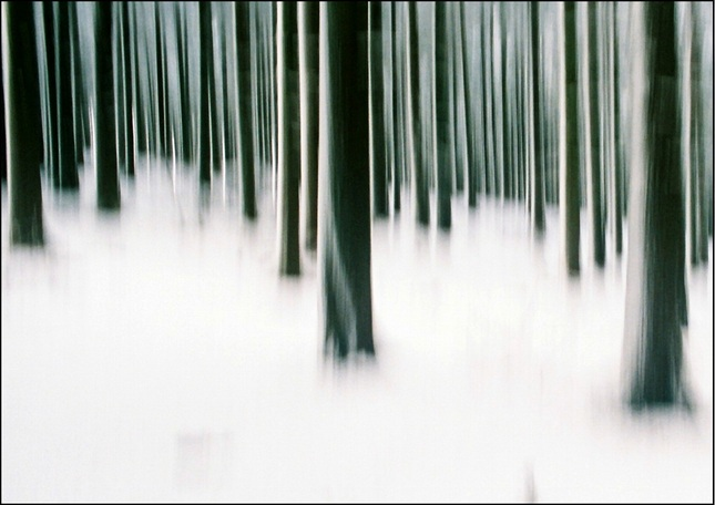 Zima v lese