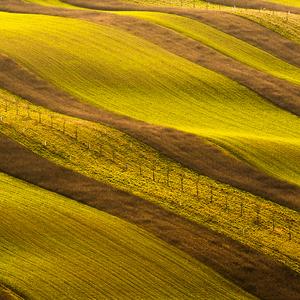Moravian biolines