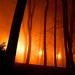 Ohňový park