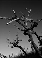 Tanec mŕtvych stromov