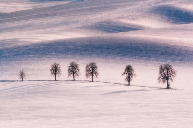 Zimné stromoradie