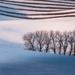 Hlboko v snehu