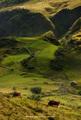 Alpský golf