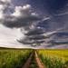 Cestovanie oblakov