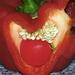 Tehotná paprika
