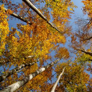 Jeseň v lese.