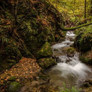 Les a jeseň