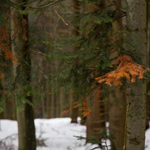 V lese.