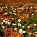 jesenno-jarné impresie