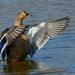 Krídla nad vodou